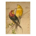 Colorful Vintage Birds On Vintage Ledger Paper Postcard
