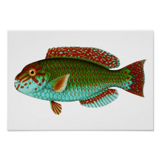 Colorful Vintage Fish Poster