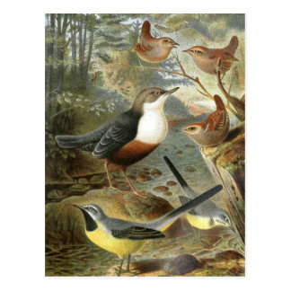 Colorful vintage illustration of birds card
