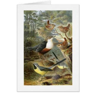 Colorful vintage illustration of birds card