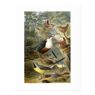 Colorful vintage illustration of birds card postcard