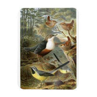 Colorful vintage illustration of birds magnet