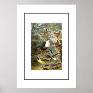 Colorful vintage illustration of birds print