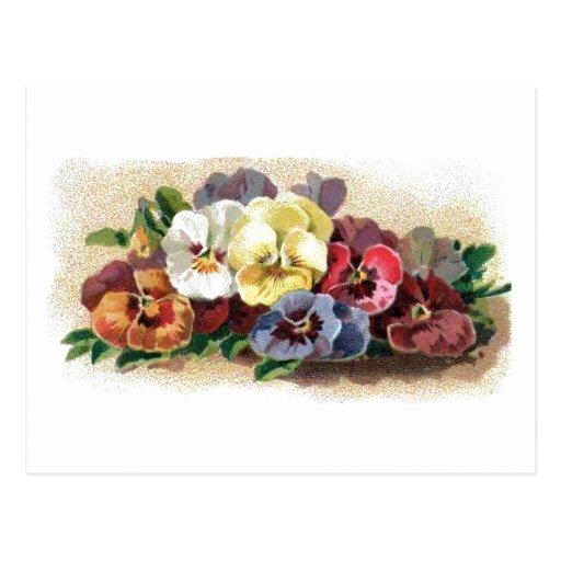 Colorful Vintage Pansies Floral Postcard