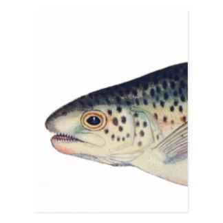 Colorful vintage salmon illustration postcard