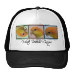 Colorful White Bellied Caique Hat