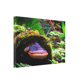 Colorful Wood Mushroom Canvas Print