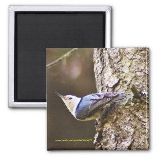 Colorful Woodpecker Fridge Magnet