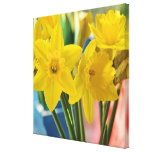 Colorful Yellow Daffodils Canvas Print