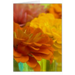 Colorful zinnias & vases III Greeting Cards