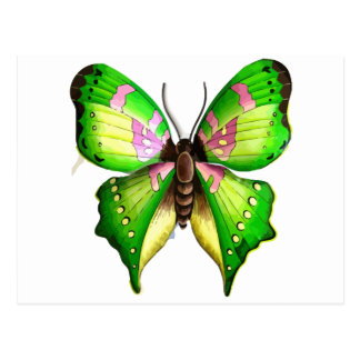 Colorfull Butterfly Postcard