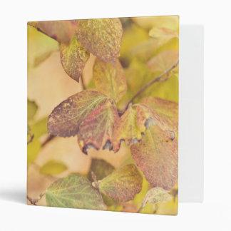 Colorfull leaves Binder