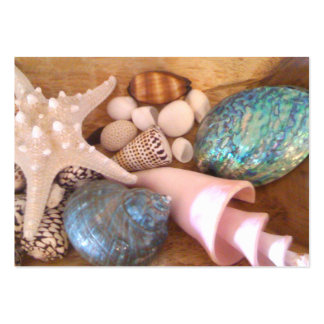 colorfull multiple sea shell arrangement large business cards (Pack of 100)