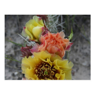 colorfull plains prickle pear flowers in pink and post cards