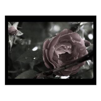 Colorized Rose & Raindrops Digital Mini Print Postcard