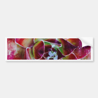 Colors and forms of nature bumper sticker