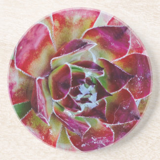 Colors and forms of nature drink coaster