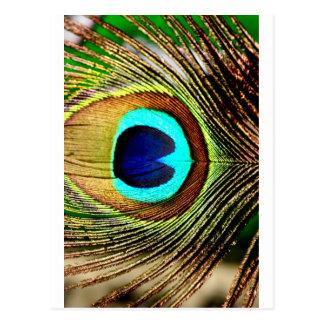 colors loco postcard