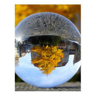 Colors of Autumn Gingko tree Postcard