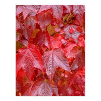 Colors of Autumn (Herbstblätter) Postcard