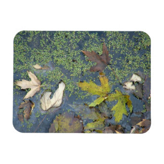Colors of fall magnet