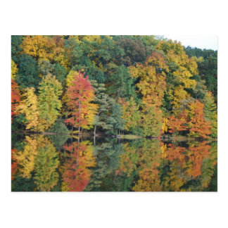 Colors Of Fall Postcard