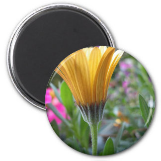 Colors of spring 2 inch round magnet