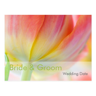 Colors of Spring Tulip • Order of the Day Postcard