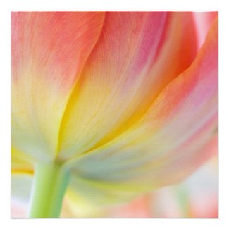 Colors of Spring Tulip • Square Card / Invitation