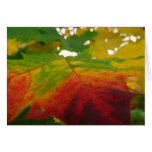 Colors of the Maple Leaf Autumn Nature Photography Card