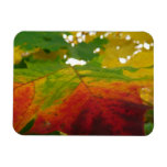 Colors of the Maple Leaf Autumn Nature Photography Magnet