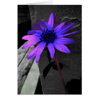 Colorsplash Purple Flower Black and White Card