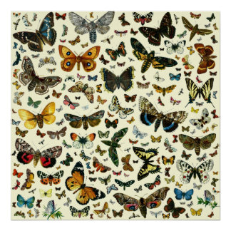 Colossal Butterfly Poster