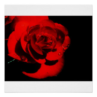 colossal red flower canvas print