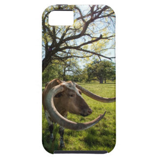 Colossol Texas Longhorn Cattle Case For iPhone 5/5S