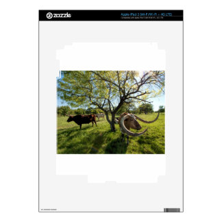 Colossol Texas Longhorn Cattle iPad 3 Skins