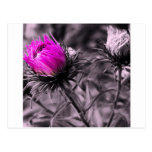 colour flower with black and white postcard