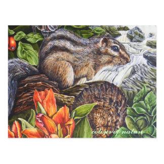 colour of nature postcard