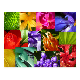 Colour Your World Postcard