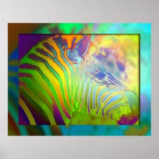coloured zebra poster