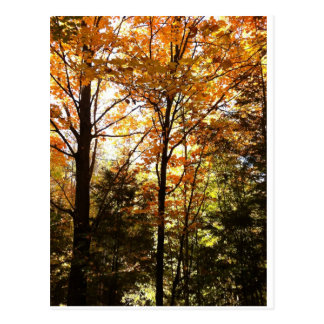 Colourful Autumn Leaves in the Forest Postcard