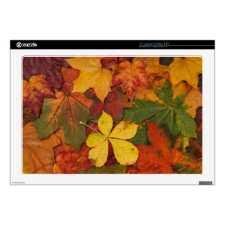 """colourful autumn leaves 17"""" laptop decals"""