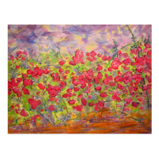 colourful blooming roses postcard