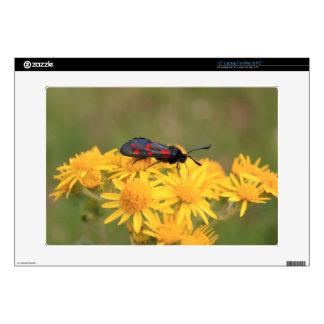 "Colourful Burnet Moth photo 15"" Laptop Decal"