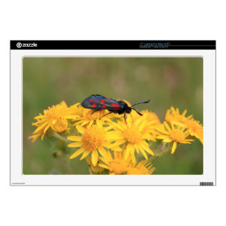 """Colourful Burnet Moth photo Decal For 17"""" Laptop"""