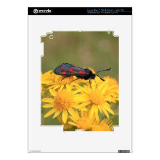 Colourful Burnet Moth photo iPad 3 Decals