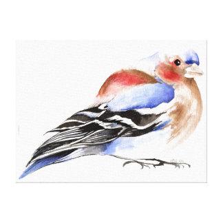 Colourful Chaffinch 2011 Canvas Print