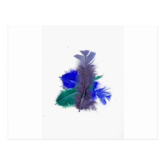 colourful feathers purple postcard