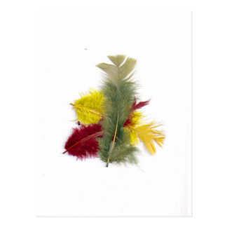 colourful feathers yellow red postcard
