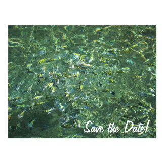 Colourful fish in clear water in Saint Lucia Postcards